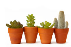 Four pots of cactuses royalty free stock photos