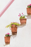 Four pots with flowers against a white wall and a pink designed line on it. Stock Photos