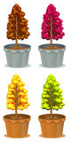 Four pots of plants Stock Image