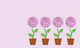 Four potted flower Stock Image