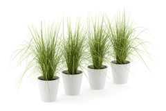 Four potted houseplants isolated on white Royalty Free Stock Photos