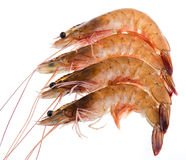 Four prawns Stock Image