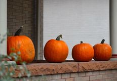 Four pumpkins Royalty Free Stock Images