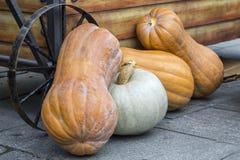 Four pumpkins on a street market Royalty Free Stock Photo