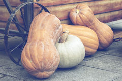Four pumpkins on a street market 3 Stock Photography