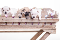 Four puppies Royalty Free Stock Photos