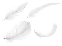Four pure white isolated feathers Stock Images