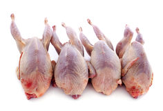 Four quails Royalty Free Stock Photo
