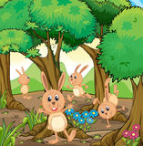 Four rabbits playing at the forest Royalty Free Stock Photos