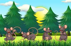 Four rats in the field. Illustration Stock Image