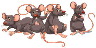 Four rats with gray fur vector illustration