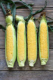 Four raw corn cob. Top view Royalty Free Stock Images