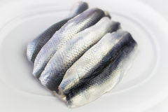 Plate with Four Raw Herrings Royalty Free Stock Images