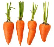 Four raw whole organic imperfect orange carrots isolated Royalty Free Stock Photo