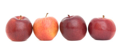 Four red apples Royalty Free Stock Photo