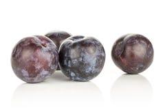 Fresh raw red blue plum isolated on white. Four red blue plums isolated on white background round whole fresh juicy fruit Stock Images