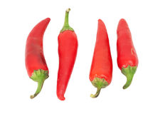 Four red chilly peppers Royalty Free Stock Photo