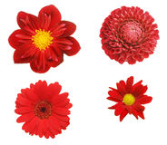 Four red flowers Stock Photography