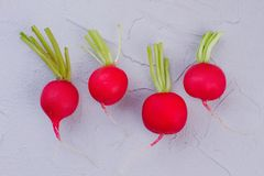Four red radishes on light background. Row of garden radishes on textured background close up Royalty Free Stock Photos
