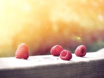 Four Red Raspberries Stock Image