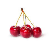 Four red ripe sweet cherries on one branch Royalty Free Stock Photos