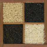 Four rice grains - white, black and brown royalty free stock photography