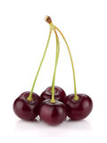 Four ripe cherries Stock Photo