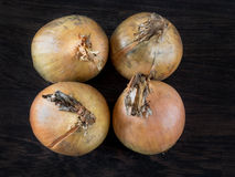 Four ripe golden onions Stock Images