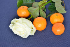 Four ripe tangerines and white rose Royalty Free Stock Photography