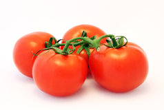 Four ripe tomatoes. Four ripe red tomatoes on a vine on a white background Royalty Free Stock Image
