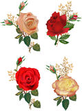 Four rose flowers compositions isolated on white Royalty Free Stock Photo