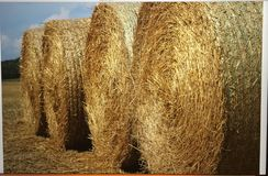 Four round bales of hay in a field royalty free stock photos