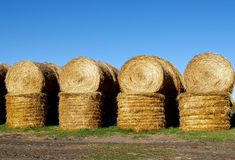 Four rows of Round Bales. On a farm near Birtle, Manitoba, Canada Royalty Free Stock Photography