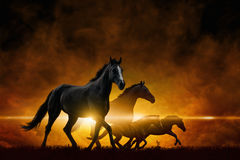 Four running black horses. Dramatic apocalyptic background - four running black horses, red glowing clouds Stock Photo