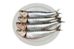 Four sardines Stock Photography