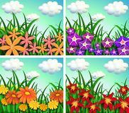 Four scenes of flower fields Royalty Free Stock Photography