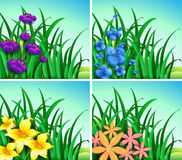 Four scenes of flowers and grass. Illustration Stock Images