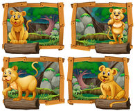 Four scenes of lion in the forest Royalty Free Stock Photos