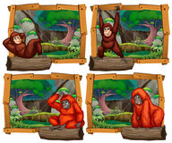 Four scenes of monkey in the jungle Royalty Free Stock Images