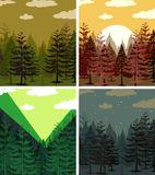 Four scenes of pine forests Royalty Free Stock Photos