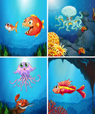 Four scenes of sea animals in the sea Royalty Free Stock Images