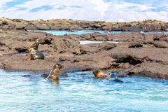 Four Sea Lions Stock Photos
