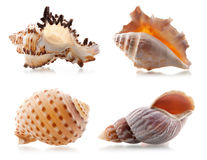 Four sea shells stock photos