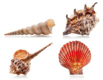 Four sea shells Stock Image