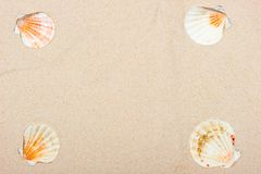 Four sea shells at the corners of sand background Stock Photos