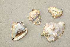 Four sea shells on sand Stock Photos