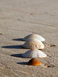 Four sea shells on wet sand a beach Royalty Free Stock Photos