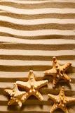 Four sea stars. Stock Photography