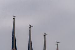 Four Seagulls sits on flagpoles. On a cold and grey day Stock Image