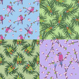 Four seamless pattern with colourful parrot Stock Photography